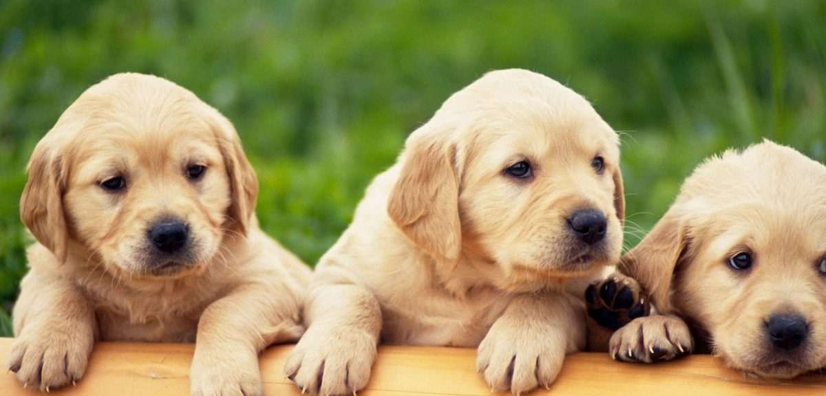 Tips for Buying a Puppy at a Pet Store